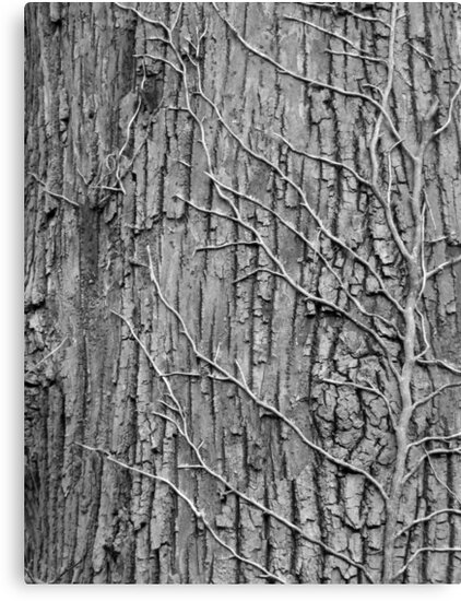 Tree and Vines B&W by elasita