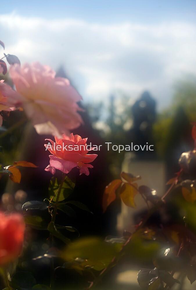 Front Page Rodin Garden by Aleksandar Topalovic