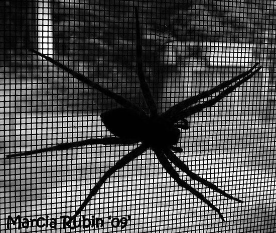 Boris the Spider by Marcia Rubin