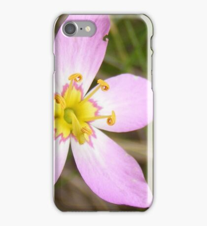 Saltmarsh Sabatia iPhone Case/Skin