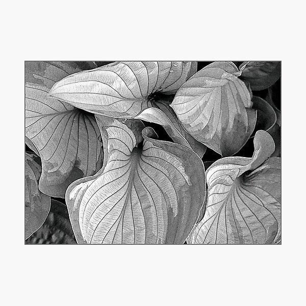 Evolving Photographic Print