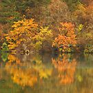 Autumn Reflections by Stephen Tapply