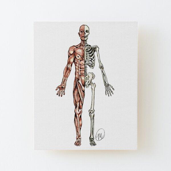 Half Muscle - Half Skeleton Wood Mounted Print