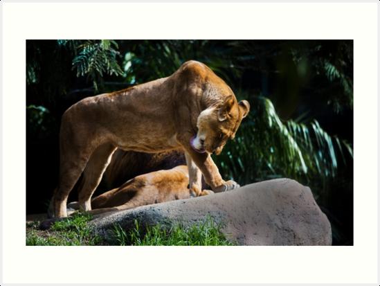 Lion Bath\