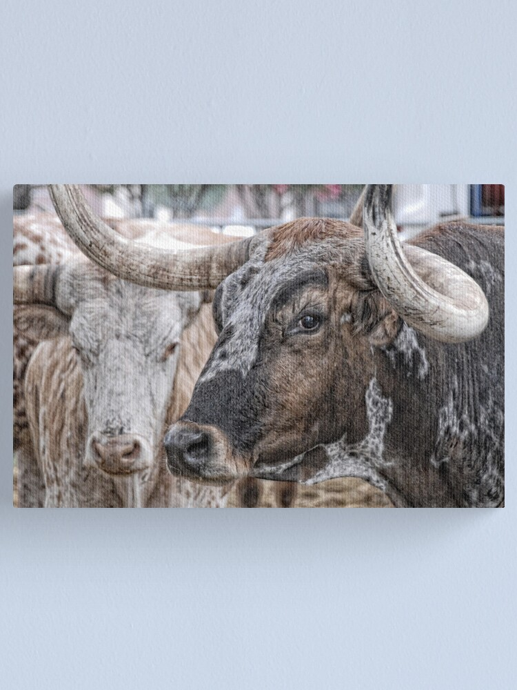 Alternate view of Longhorn Stare Canvas Print