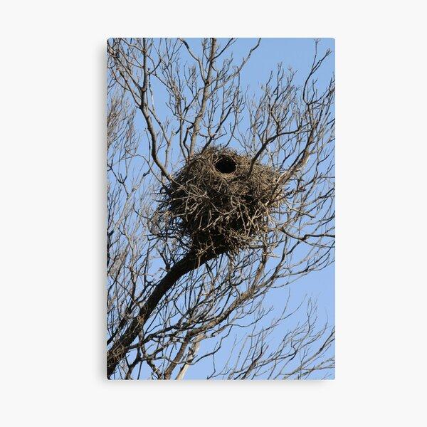 Mungo District Birds Home Canvas Print