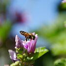 Bee in flight by agenttomcat