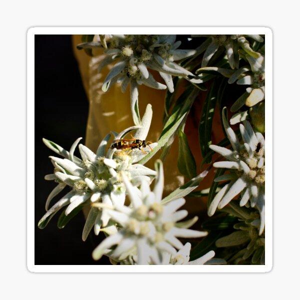 Edelweiß und die Biene Sticker