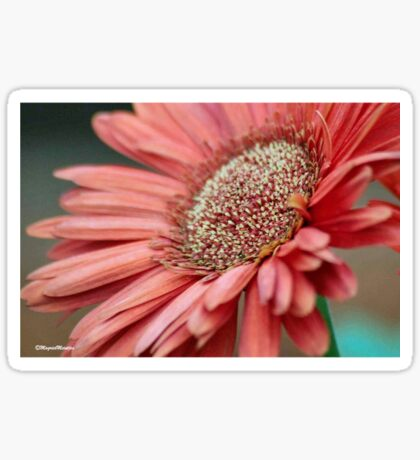GERBERA IN PINK Sticker