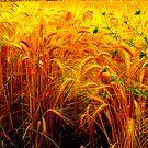 Grain by Tube