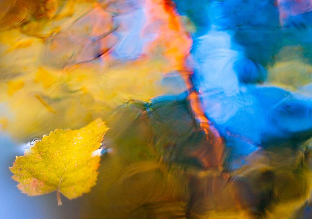 Reflection by natans