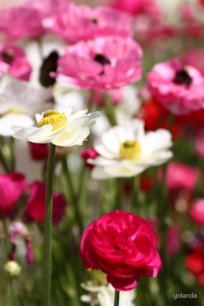 Spring Garden by yolanda