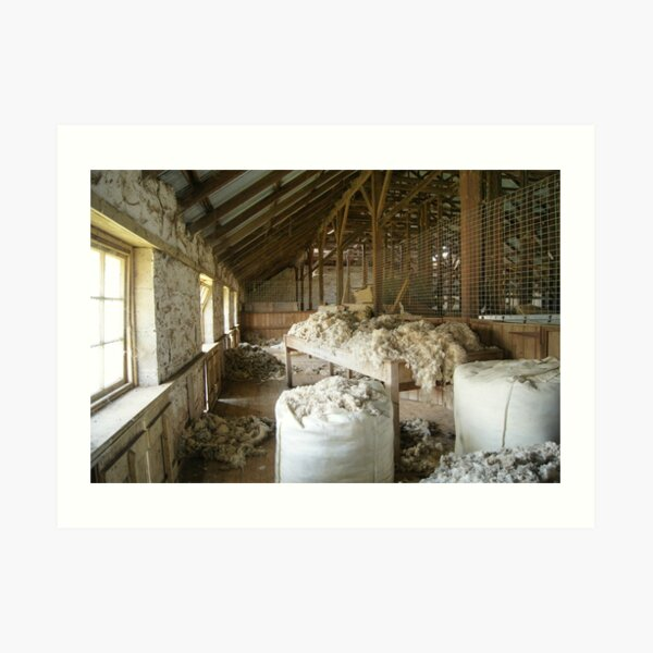 Woolshed in colour Art Print