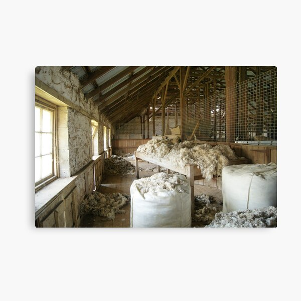Woolshed in colour Canvas Print
