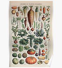 Adolphe Millot legume et plante potageres pour tous Poster