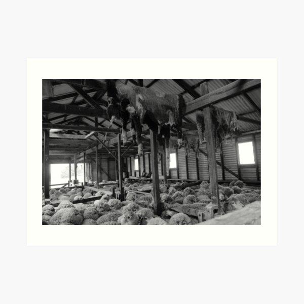 Shearing Shed Lismore Vic Art Print