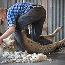 Click Go The Shears! by Joanna Beilby