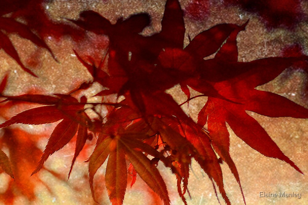 Autumn by Elaine  Manley