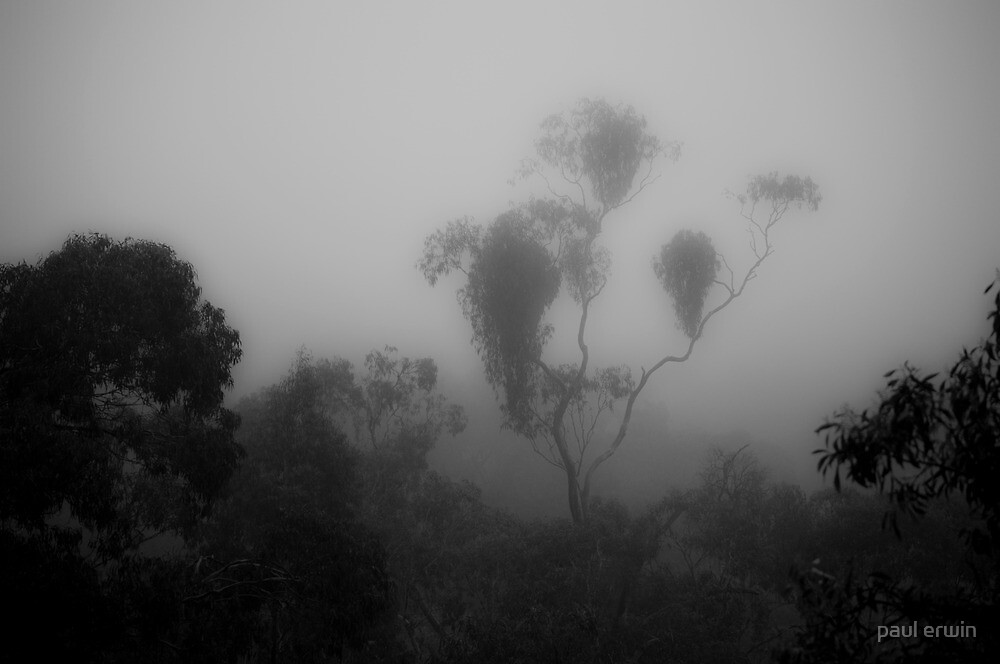 gums in the mist by paul erwin