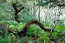 Sherwood Forest National Nature Reserve by Elaine123
