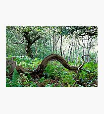 Sherwood Forest National Nature Reserve Photographic Print