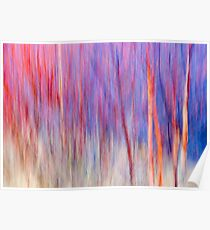 White Birches and Willows Poster