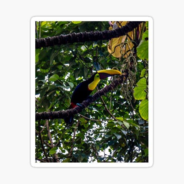 Costa Rican Toucan Sticker