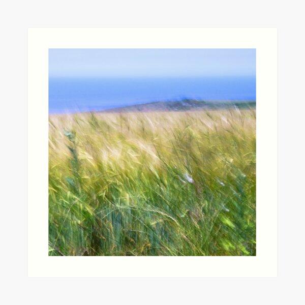 Clifftop Wheat Art Print