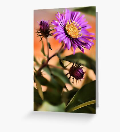 New England Fall Aster Greeting Card