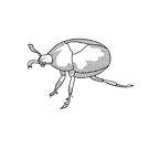 Black beetle bug by MangaKid