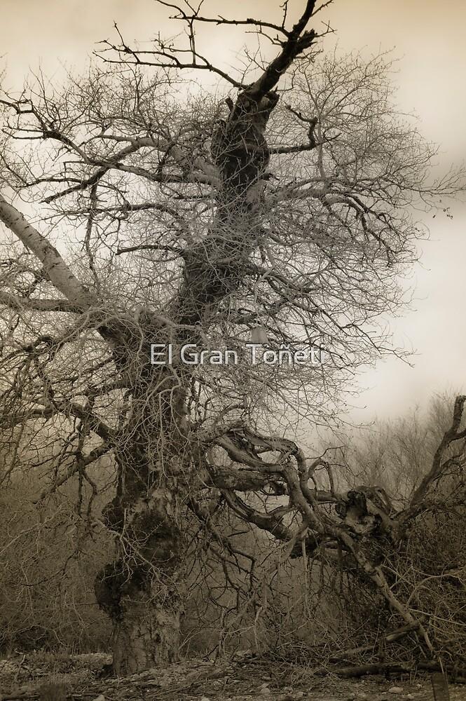 The old Ash by El Gran Toñeti