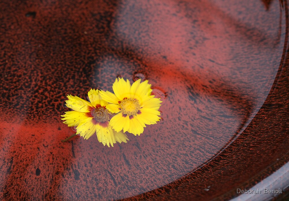 Floating In The Birdbath by Deborah  Benoit