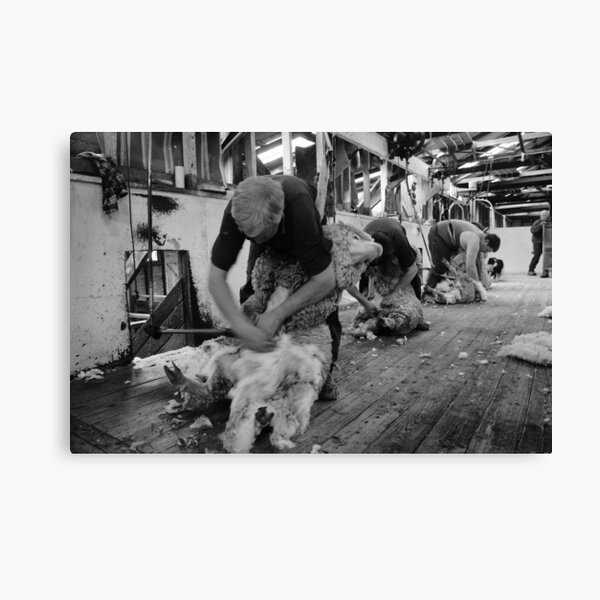 The Team at Work Canvas Print