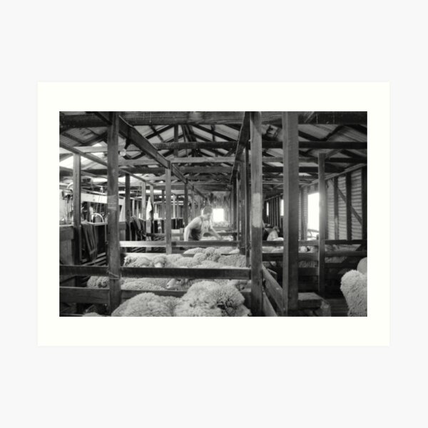 Shearing Shed Lismore Vic Day 1. Art Print