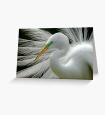 Great White Egret Breeding Perfection Greeting Card