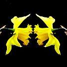 Macro Flowers by Josie Jackson