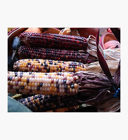Indian Corn Photographic Print