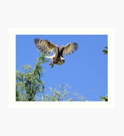 Great Horned Owl ~ Sherry's Juvenile Art Print