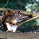 I can sing........I'm a Nut....I'm a nut! by Rose Gallik