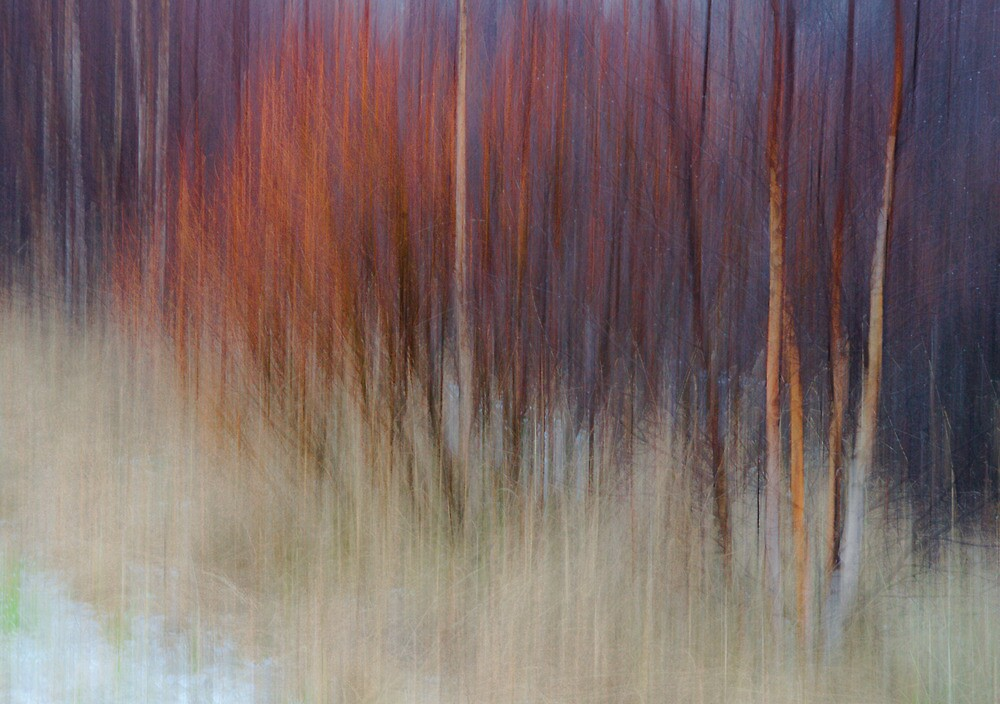 White Birches and Willows II by finnarct