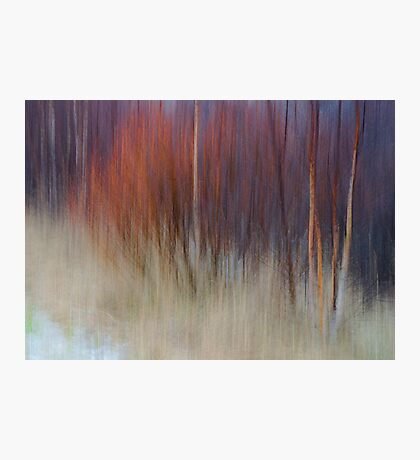 White Birches and Willows II Photographic Print