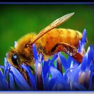 Busy Bee by Angie O'Connor