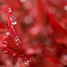Lady In Red by iltby