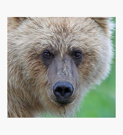Grizzly up close!! Photographic Print