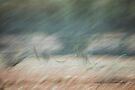 Kangaroo Abstract Flight © Vicki Ferrari Photography by Vicki Ferrari