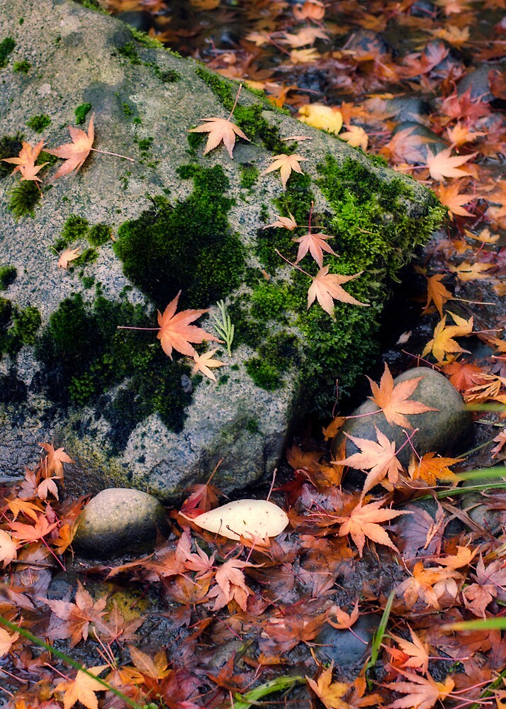Fall Leaves and Mossy Rock by Lynnette Peizer