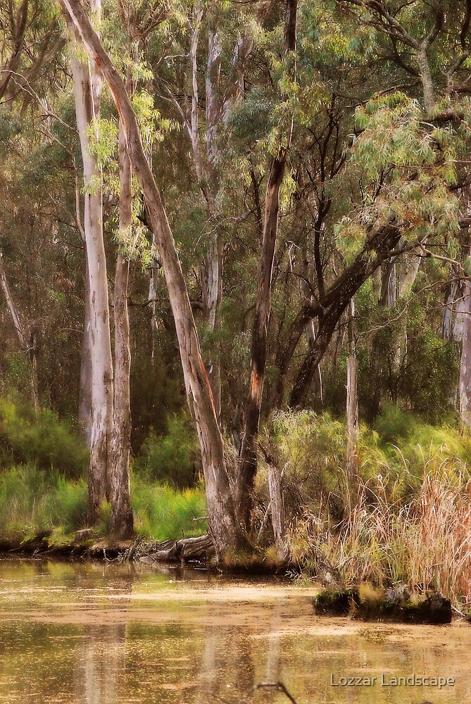 Trees at Gunbower, near Cohuna, Victoria  by Lorraine McCarthy by Lozzar Landscape