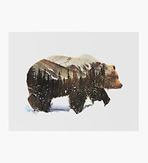 Arctic Grizzly Bear Photographic Print
