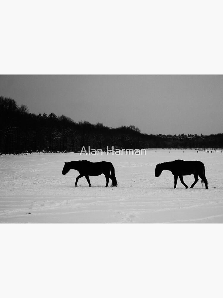Horses On Snow by AlanHarman