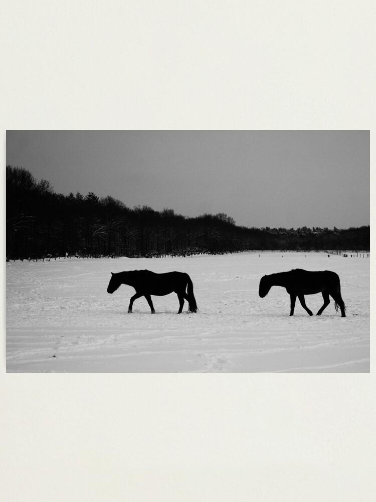 Alternate view of Horses On Snow Photographic Print